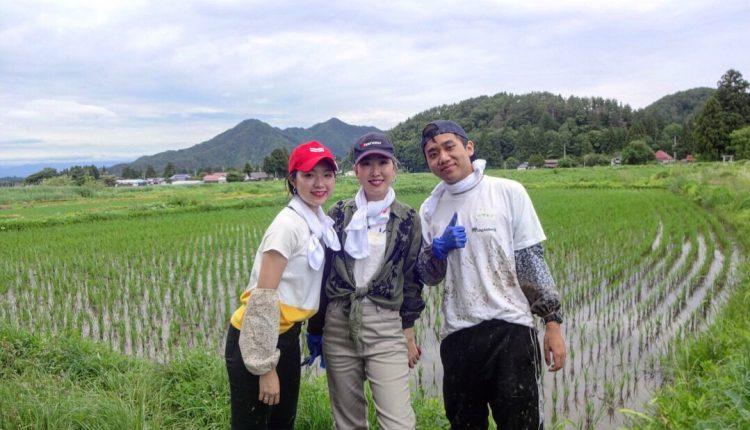Takahata Ricefield